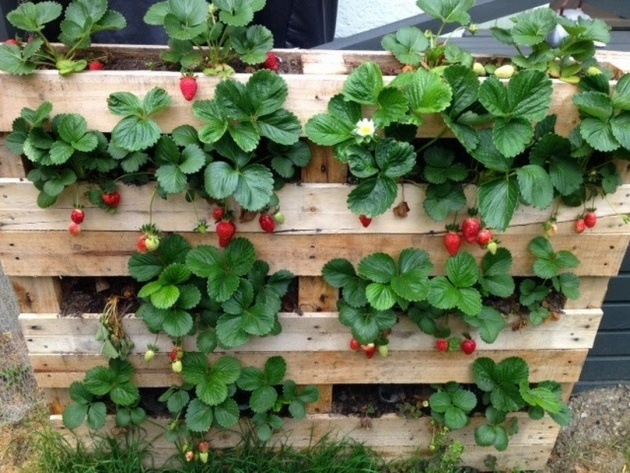 Easy Pallet Strawberry Planter Picture