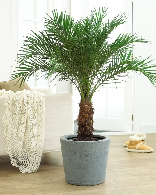 Easy Palm Tree Plant Image