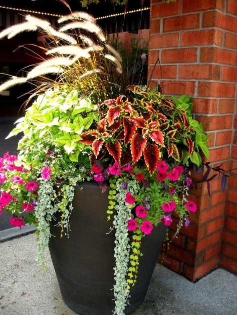 Easy Patio Planter Ideas Photo