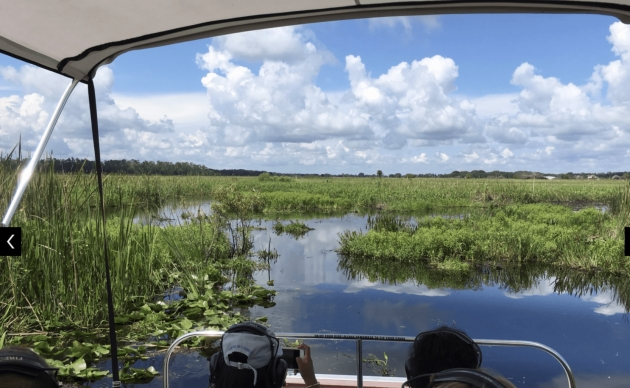 Easy Plants In The Everglades Facts Picture