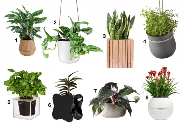 Easy Self Watering Planters Image