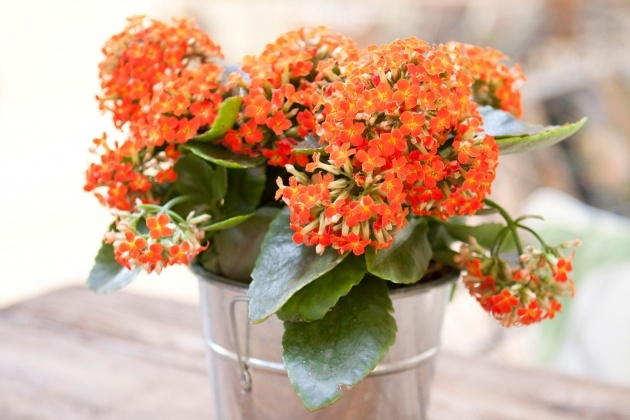 Easy Small Indoor Plants That Flower Picture