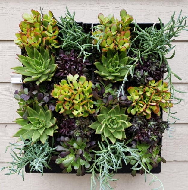 Easy Succulent Wall Planter Photo