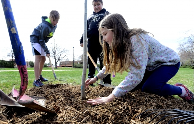 Easy Tree Planting Picture