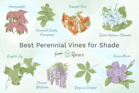 Vines That Grow In Shade
