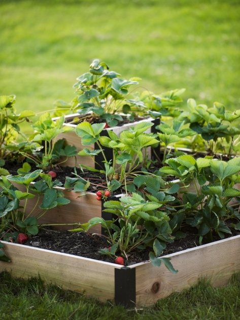 Fantastic 3 Tier Strawberry Planter Photo