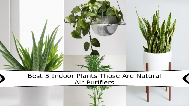 Fantastic Air Purifier Plant Indoor Picture
