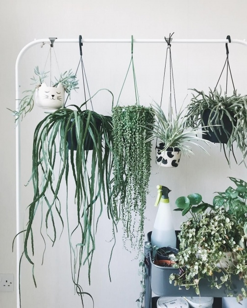 Fantastic Hooks For Hanging Plants Image