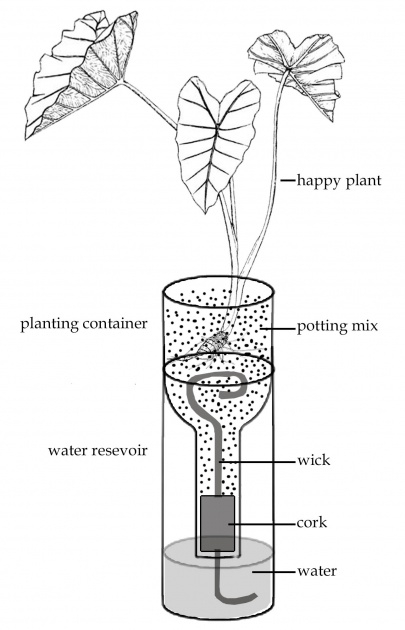 Fantastic How Do Self Watering Planters Work Picture