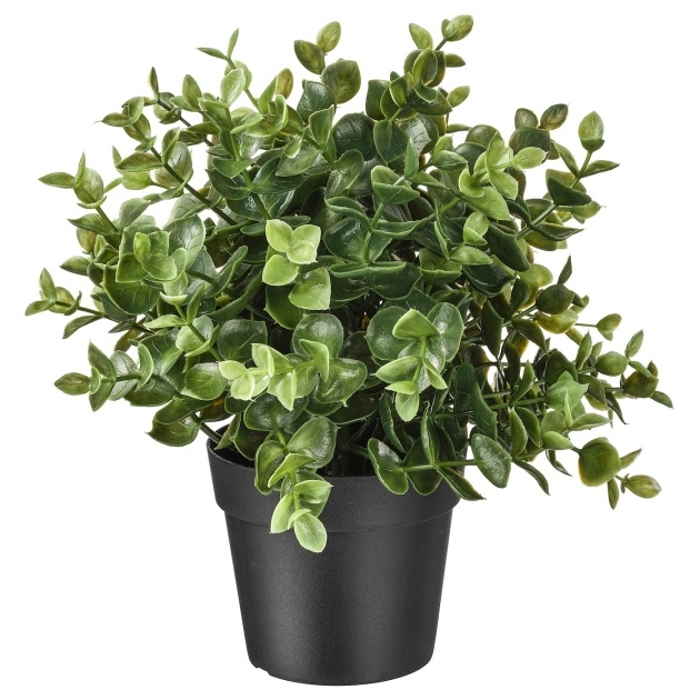 Fantastic Ikea Artificial Plants Image