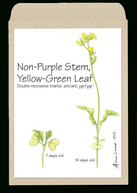 Fantastic Plant Has Yellow Flowers And A Purple Stem Photo