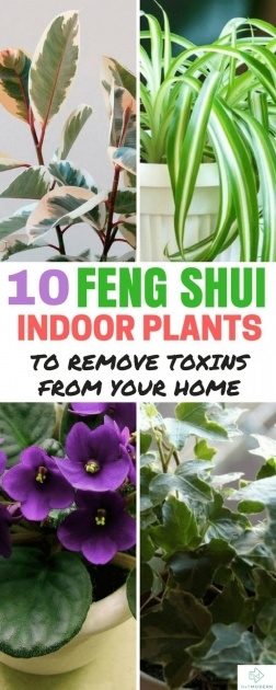 Fantastic Plants In Bedroom Feng Shui Picture