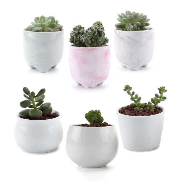 Fantastic Small Plant Pots Photo