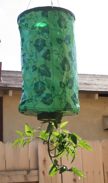 Fantastic Topsy Turvy Tomato Planter Photo