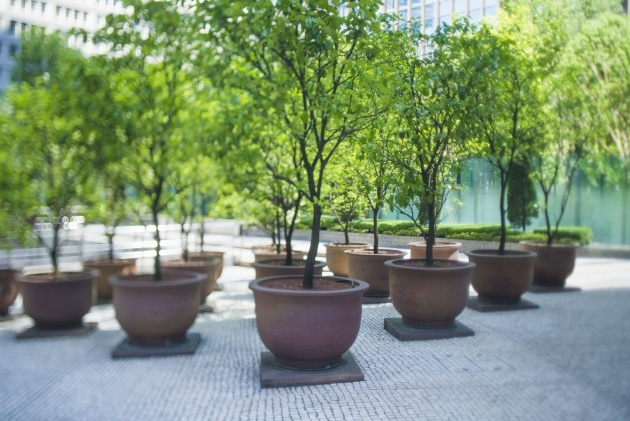Fantastic Trees In Planters Image