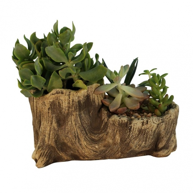 Fantastic Wood Log Planter Photo