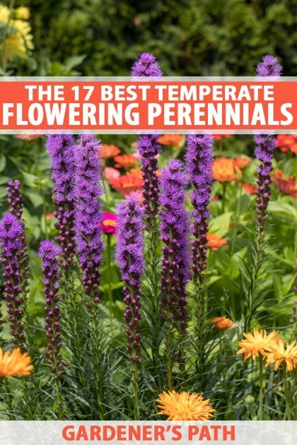 Fascinating Best Garden Plants Image