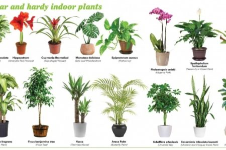 Common House Plants