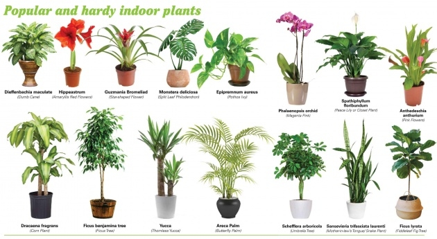 Fascinating Common House Plants Picture