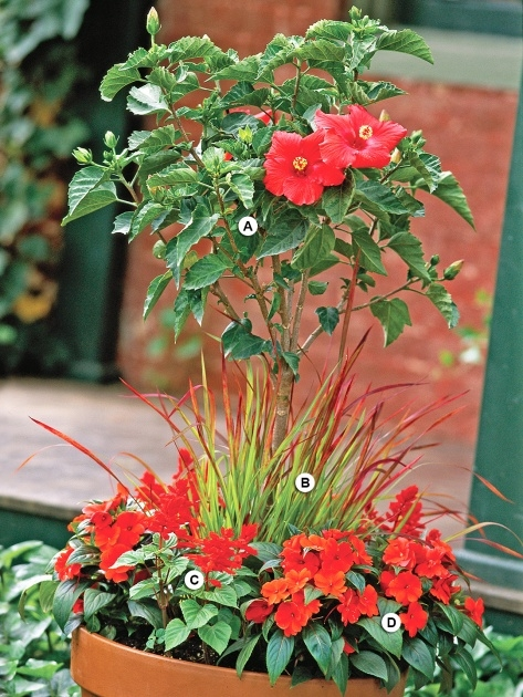 Fascinating Container Gardens For Full Sun Image