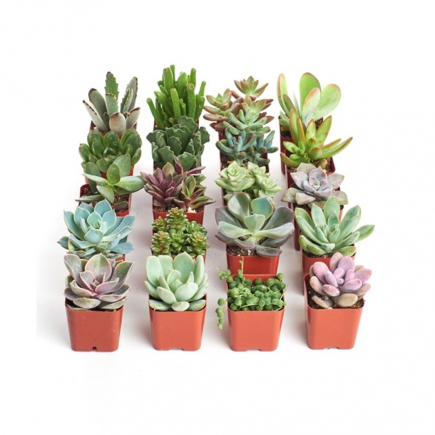 Fascinating Home Depot Plants Picture