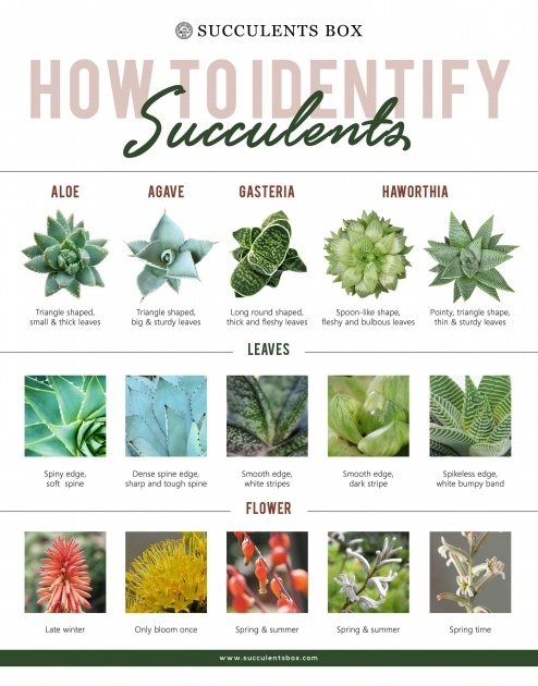 Fascinating House Plants Identification Image