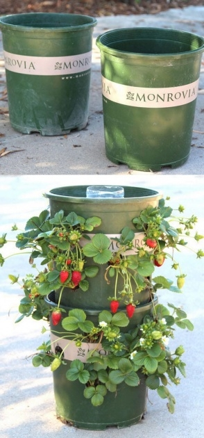Fascinating Self Watering Strawberry Planter Image
