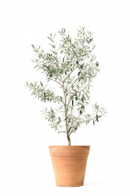 Fascinating Small Tree Plant Image