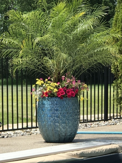 Fascinating Swimming Pool Planters Picture