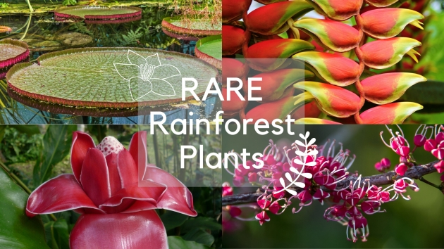 Fascinating Unique Plants In The Rainforest Picture