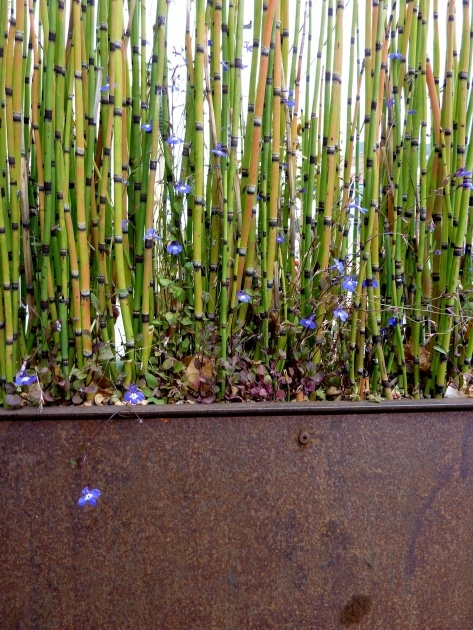 Gallery Of Bamboo Planter Box Image