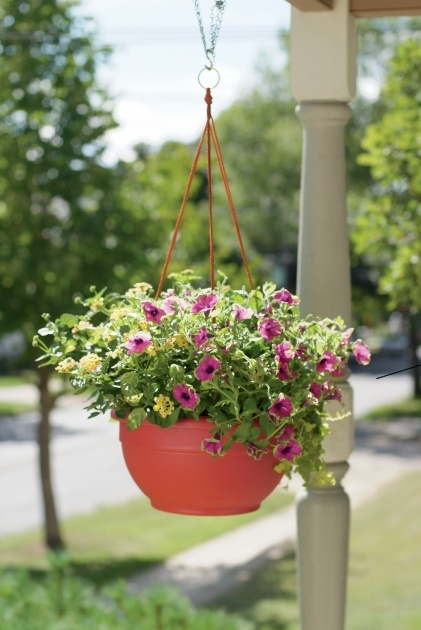 Gallery Of Cheap Hanging Plants Photo