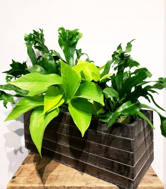 Gallery Of Indoor Planter Box Image