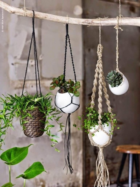 Gallery Of Outdoor Hanging Plants Picture