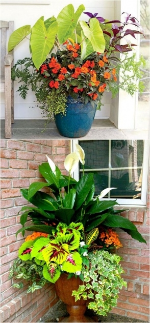 Gallery Of Plants For Planters In Shade Picture