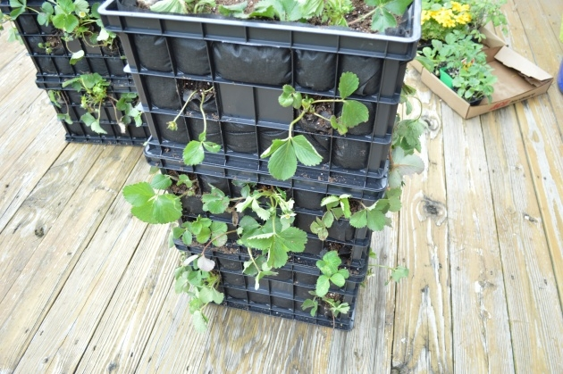 Gallery Of Strawberry Tower Planter Photo