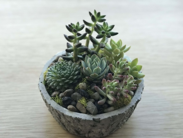 Gallery Of Succulent Planter Photo