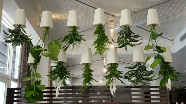 Gallery Of Upside Down Hanging Plants Image