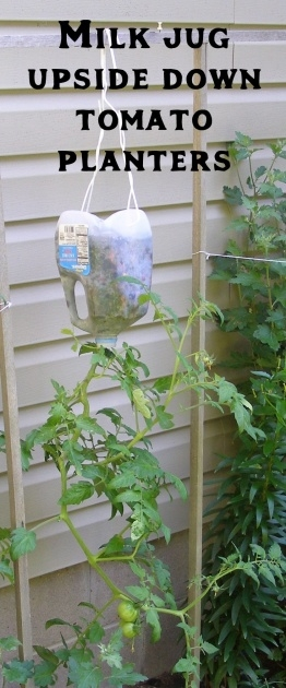 Gallery Of Upside Down Tomato Planter Diy Photo