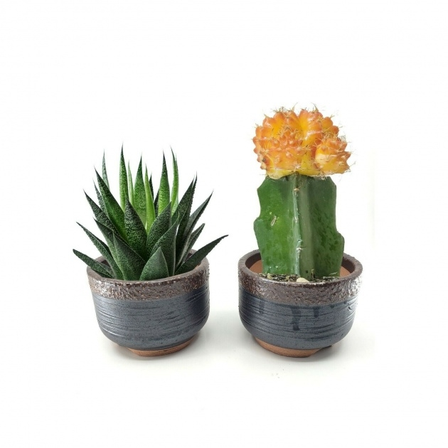Good Cactus Plant Pot Photo