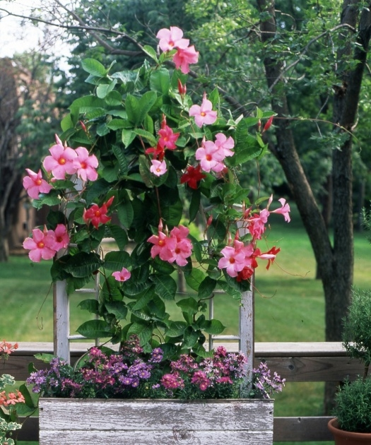 Good Container Gardens For Full Sun Photo