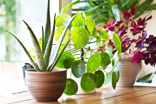 Good Fast Growing House Plants Image
