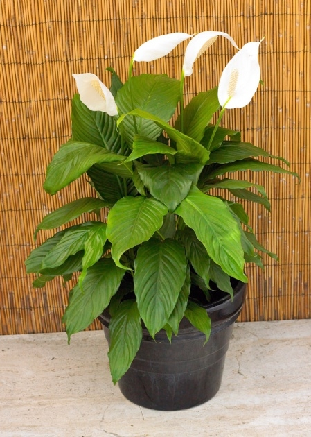 Good Fast Growing House Plants Photo
