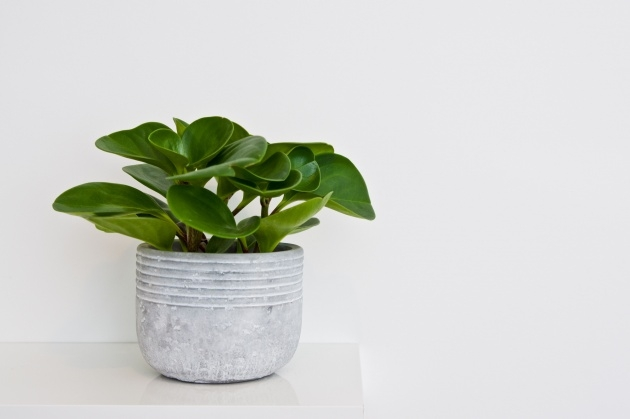 Good Green Plant Pot Photo