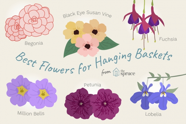 Good Hanging Perennials Flowers For Containers Photo