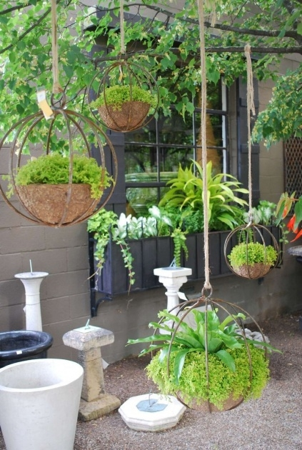 Good Hanging Plants Ideas Image