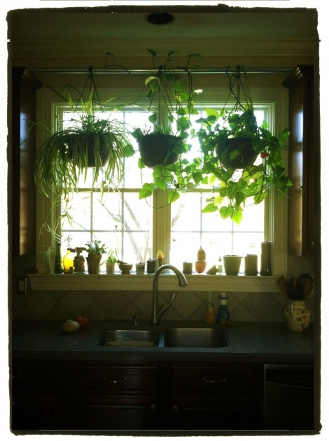 Good Kitchen Window Plants Picture