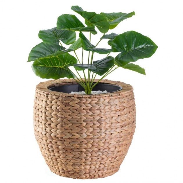 Good Large Plant Pots Photo
