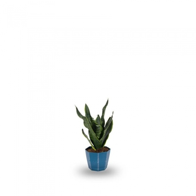 Good Lowes Plants Image