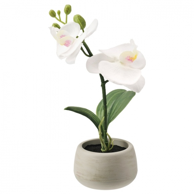 Good Orchid Plant Pot Picture